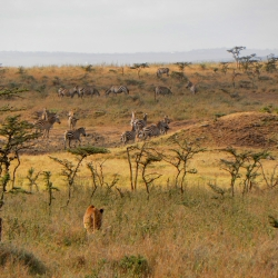 Smolen_Nairobi National Park_Kenya_September 2011_2_250x250_scaled_cropp